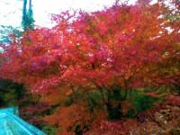 秋ですね。  =TAKESHI=