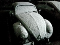 Sickly Bug in snow !!!  =TAKESHI=